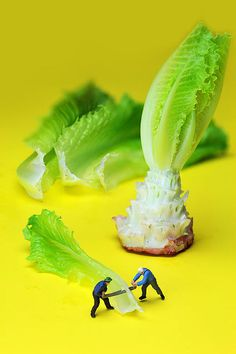 lumber workers cutting Lettuce little people on food, creative photography, Fine art America, By Paul Ge.