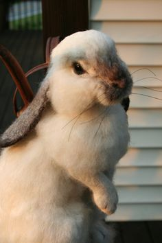 This is a WOW - Price is out of my league, but that doesn't stop me from being amazed and appreciative of this woman's work.  OOAK Needle felted Alpaca Life Size Lop Ear Bunny Rabbit by SteviT, $995.00