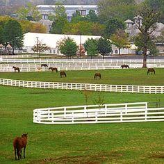 Horse farm near Lexington, Kentucky.