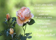 Rose, Flowers, Plants, Blog, Pink, Blogging, Plant, Roses, Royal Icing Flowers