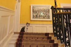 Larry on top of the No 10 staircase.