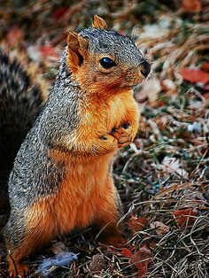 tracie louise photography | Tracie Louise › Portfolio › Praying Squirrel
