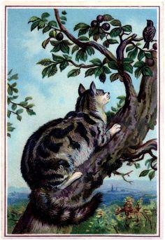 Vintage Cat in Tree Image