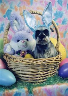 This is so cute! That is the kind of Easter basket I want!