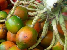 fruits of costa rica