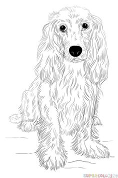 How to draw a Cocker Spaniel | Step by step Drawing tutorials