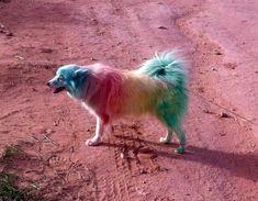 rainbow dog   rainbow dog funny animals dogs pets rainbows
