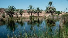 Israel's Neot Kedumim nature reserve is a recreation of the landscape of biblical times (Credit: Credit: Hanan Isachar/Getty Images) Israel, Nature Reserve, Mediterranean Recipes, Cool Places To Visit, Where To Go, The Good Place, Tourism, Diet, Landscape