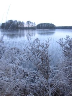 Beautifull blue colours and frost in November in Kivijärvi in Central Finland