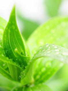 Farb-und Stilberatung mit www.farben-reich.com - green