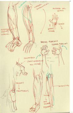 Mari Arakaki explique comment dessiner l'anatomie humaine