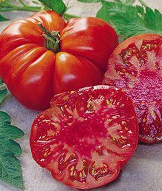 Tomato, Tomande Hybrid, , large