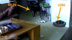 A Two Dog World Through the Lens of a Vimtag Indoor Camera + GIVEAWAY! #sponsored | http://www.beaglesandbargains.com/dog-world-lens-vimtag-indoor-camera/