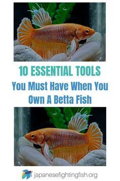 10 Office Escape Ideas Betta Fish Tank Betta Fish Pet Fish