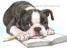 pencil drawings of boston bull terriers