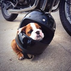 Can I come for a ride??