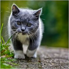 I want a cat that looks like this!!