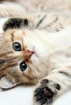 Me encanta :) Gatito ♡♥