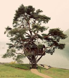 Treehouse on the shore of Loch Goil in Scotland