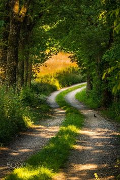 Country lane (Austria) by Christian Hoflehner on 500px