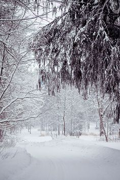 """Winter *❄~*.Wishes & Dreams.*~❄* """"I remember drifts so deep . . . when I was little - silent, silver, endless, and dreamy"""". ~Susan Orlean"""