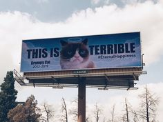 """""""We are honoring the internet legend today. Grumpy Cat Quotes, Funny Grumpy Cat Memes, Grump Cat, Out Of Home Advertising, Rainbow Bridge, Oklahoma City, Heaven, Internet, Hero"""