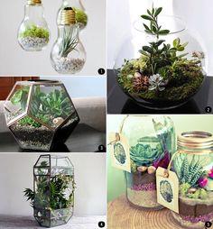 Interiores con plantas: terrarios, suculentas, cactus, tillandsias... | conkansei.com