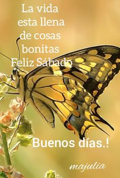 Spanish Prayers, Blessings, Blessed, House, Animals, Stone Fire Pits, Good Morning Saturday, Animales, Home