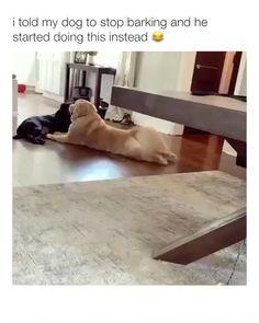 Funny Animal Jokes, Funny Dog Memes, Funny Animal Videos, Funny Animal Pictures, Animal Memes, Animal Humor, Sports Pictures, Animal Quotes, Dog Pictures