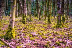 I love the colours in this photo, the green moss with the pinky/purple tones.