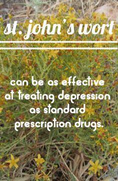 http://onegr.pl/1hfCI53 #healingherbs #stjohnswort
