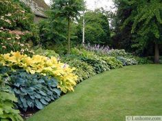 Hostas are beautiful plants for garden design and yard landscaping
