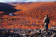 'Ruska' Autumn colors in Utsjoki, Lapland, Finland Lappland, Great Places, Places To Go, Beautiful Places, Arctic Circle, Helsinki, Places Around The World, Wonders Of The World, National Parks