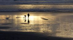 Port Waikato people with dog 2 By janet Keen Photographer Beach Scenes, New Zealand, Mosaic, Sunset, Creative, Dogs, Artist, Artwork, People