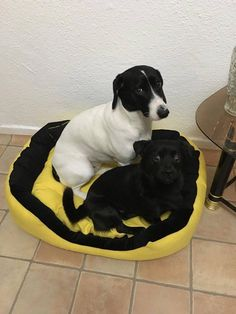 Handmade bed for medium size dogs, manually sewn and finished, made from resistant materials, size 80/64 cm, hight 23 cm, filled with silicone fluff and comfortable for any furry pets. Removable cushion with 2 sides. Unique design! The rectangular shape of the bed and high margins are ideal for squatting and provides a sense of security for the pet.The bed is washable at 30 ° C.