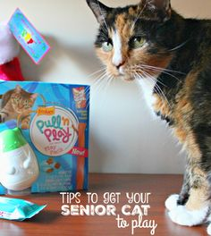 How to get your older cat to play