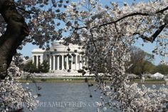 WASHINGTON DC: Tips from a local on visiting the National Cherry Blossom Festival this spring.