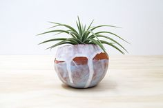 SALE +Free Plant! https://www.etsy.com/shop/mudpuppy?section_id=7008026