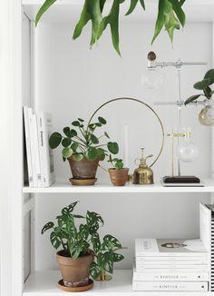Lundia classic -kirjahyllyn modaus | plants decoration