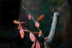 Zweige im Oktober - Jahreszeiten - Galerie - Community