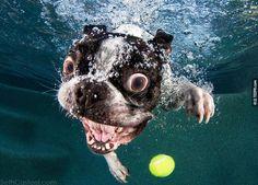 當狗狗跳到水裡撿球的時候,他們露出的表情會是你今天最大的驚喜。 - TEEPR