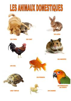 Les animaux domestiques French Teacher, French Class, French Lessons, Teaching French, Animal Projects, Animal Crafts, Web Animal, Learn French, French Language