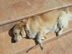 a lazy dog at cunda island