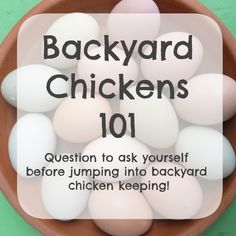 Backyard Chickens 101 - questions to ask yourself before getting chickens! urban farming. eggs. pets.