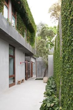 love creeper on wall Franchesca Watson Modern Courtyard, Courtyard Gardens, Mountain Dream Homes, Weatherboard House, Small Courtyards, Garden Landscape Design, Landscaping Plants, Outdoor Areas, Land Scape