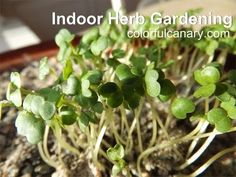 Weekend Welless - Growing Herbs Indoors in Winter for Flavorful Salads