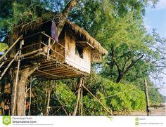 Simple Tree House  #Treehouse Pinned by www.modlar.com
