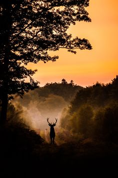Y EN MEDIO DEL CAMINO, SE APARECIÓ EL DUEÑO DEL BOSQUE...- Photograph Deer God by Myriam Dupouy on 500px