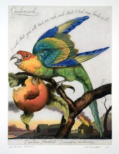 Condemned, 2006. Walton Ford | Wingate Studio. Carolina Parakeet, Conuropsis carolinensis, extinct 1939. Quote paraphrased from the last words of Carl Panzram.