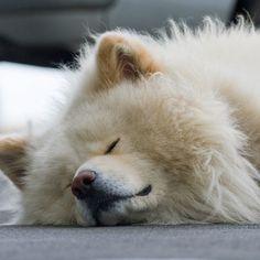 Japanese famous dog wasao! so lovely! :)